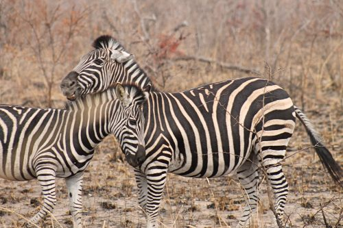 8 Day Kruger, Swaziland and Indian Ocean Private Safari